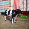 仿真奶牛模型 真皮奶牛标本