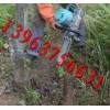 生产全新型树木移植机/铲式挖树机厂家