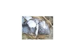 常平硅胶回收价格欢迎来电咨询13580814329