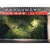 郑州健身房植物墙制作-河南城市园丁园艺有限公司
