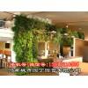 河南城市园丁_郑州阳台生态墙制作,垂直绿化