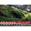 郑州阳台生态墙制作-设计师绿墙
