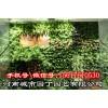 郑州活动植物墙市场价格-河南城市园丁园艺有限公司