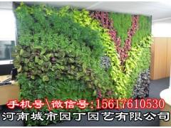 郑州花架植物墙市场价格-河南城市园丁园艺有限公司