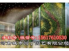 郑州海绵毯植物墙市场价格-河南城市园丁园艺有限公司