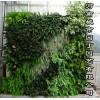 郑州国外植物墙市场价格-河南城市园丁园艺有限公司