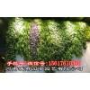 郑州工业风植物墙市场价格-河南城市园丁园艺有限公司