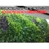 郑州智能植物墙施工报价-河南城市园丁园艺有限公司