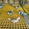 热销养殖格栅鸽舍漏粪篦子玻璃钢格栅